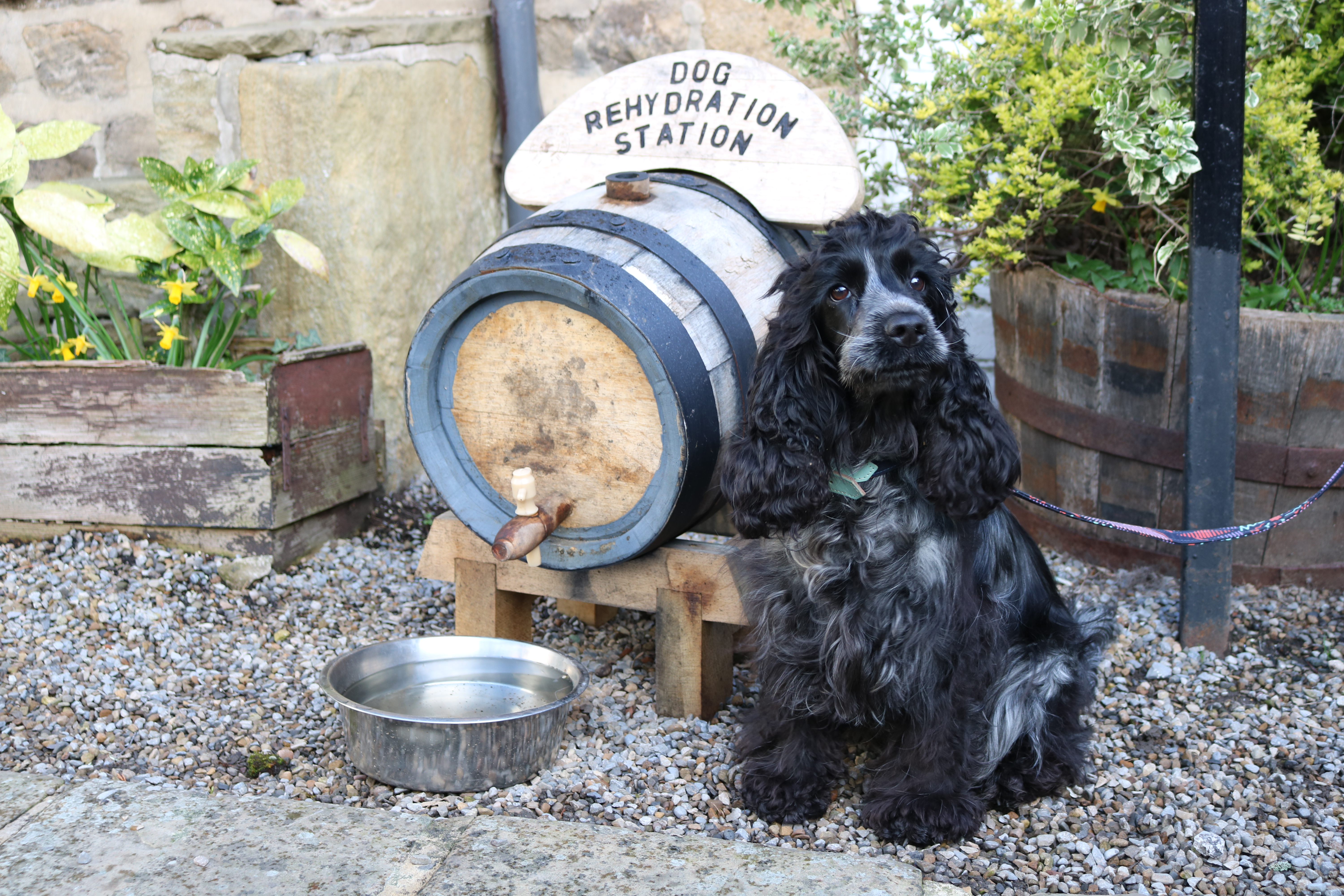 A Dog in the Dales: Part 1 – Maya does Masham