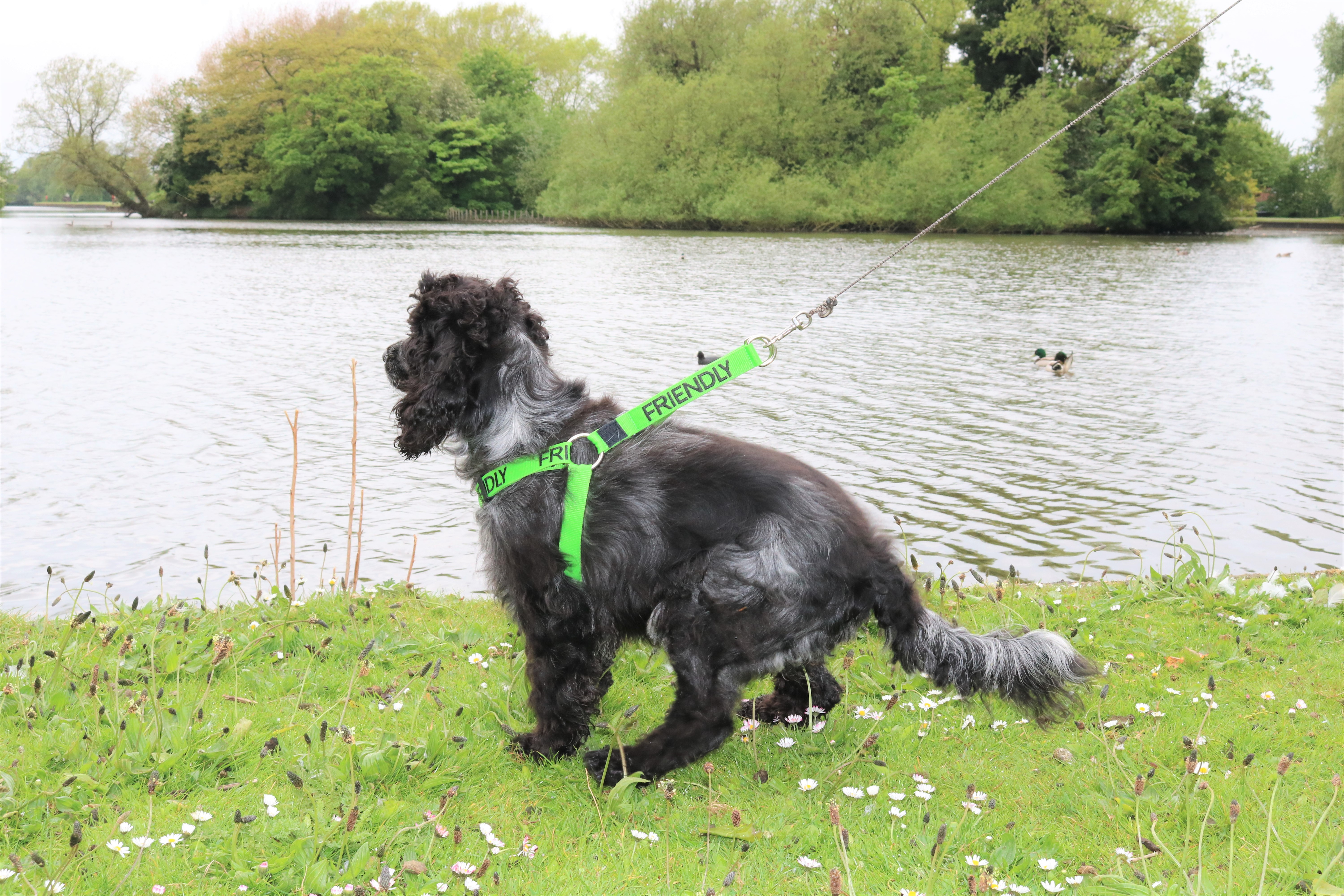 Friendly Dog Collars Non-Pull Harness