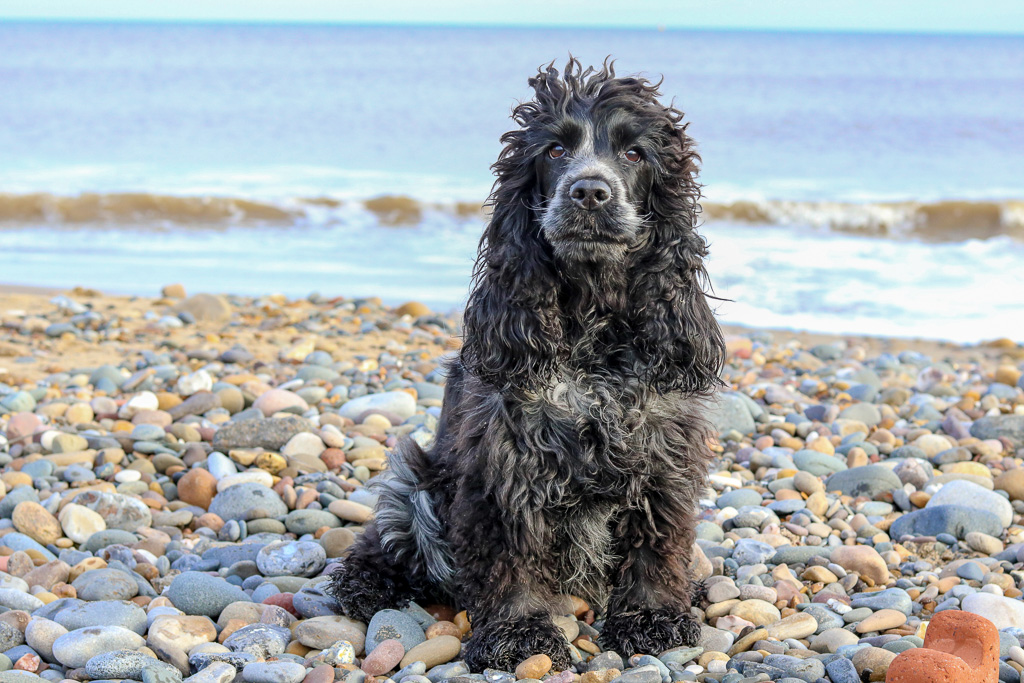Dog Friendly East Yorkshire:  Hornsea