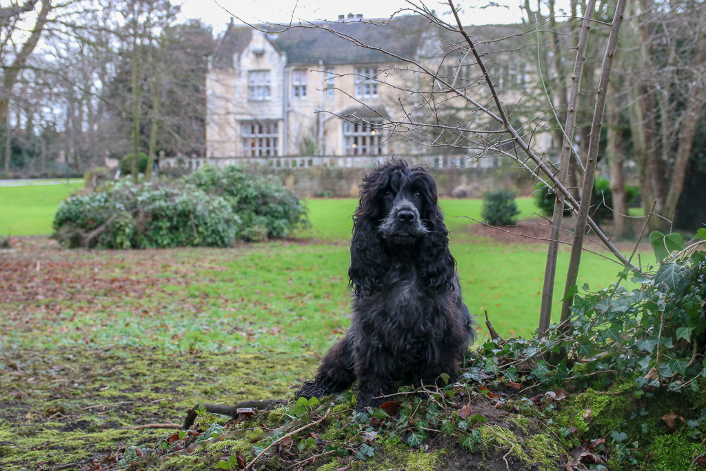 A dog friendly stay at Monk Fryston Hall