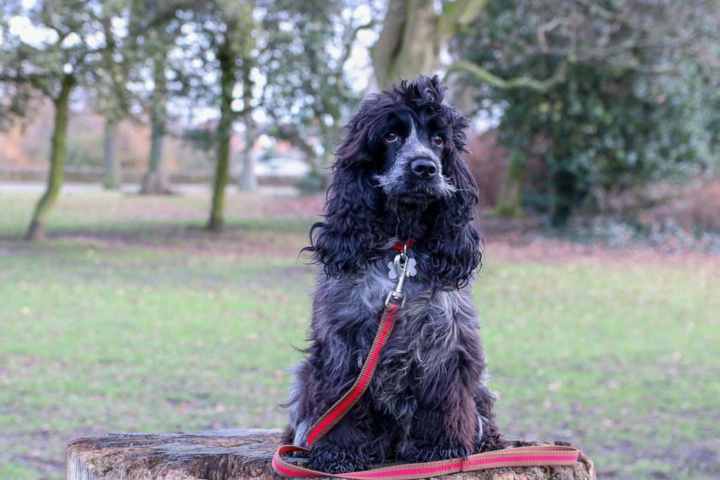 Reg&Bob A Collar and Lead Set for Dogs who want to be Dogs