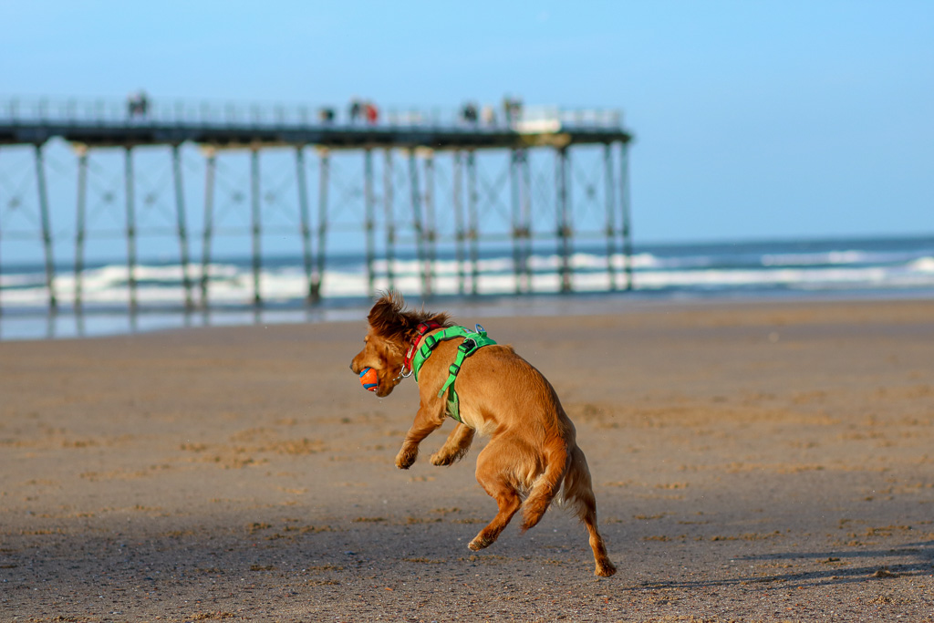 Dog Friendly North Yorkshire : Saltburn-by-the-sea area