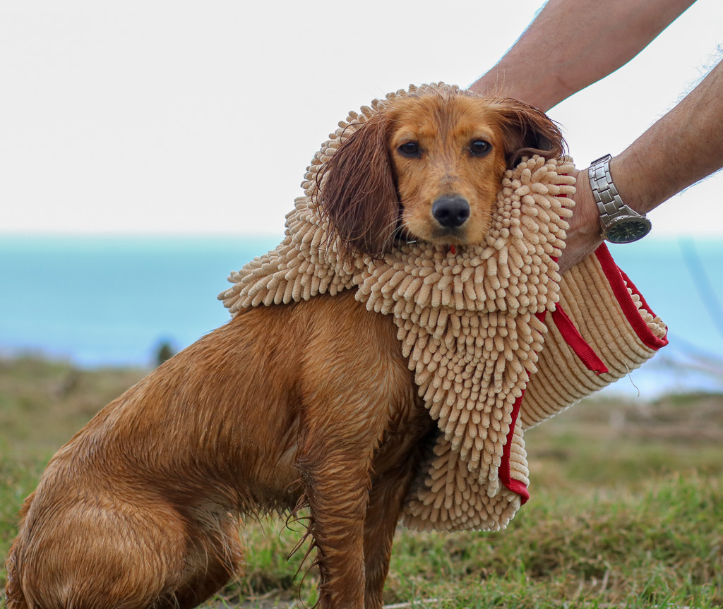 Soggy Doggy – Drying Solutions for Wet Dogs