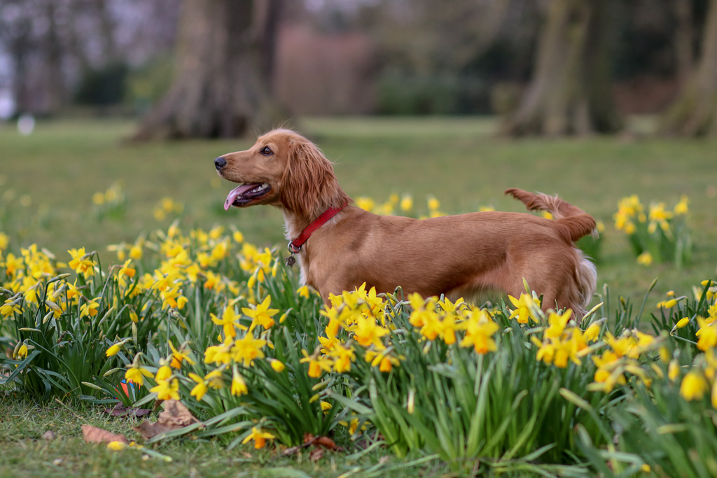 Celebrate Spring with your Dog – 5 ideas for spring outings