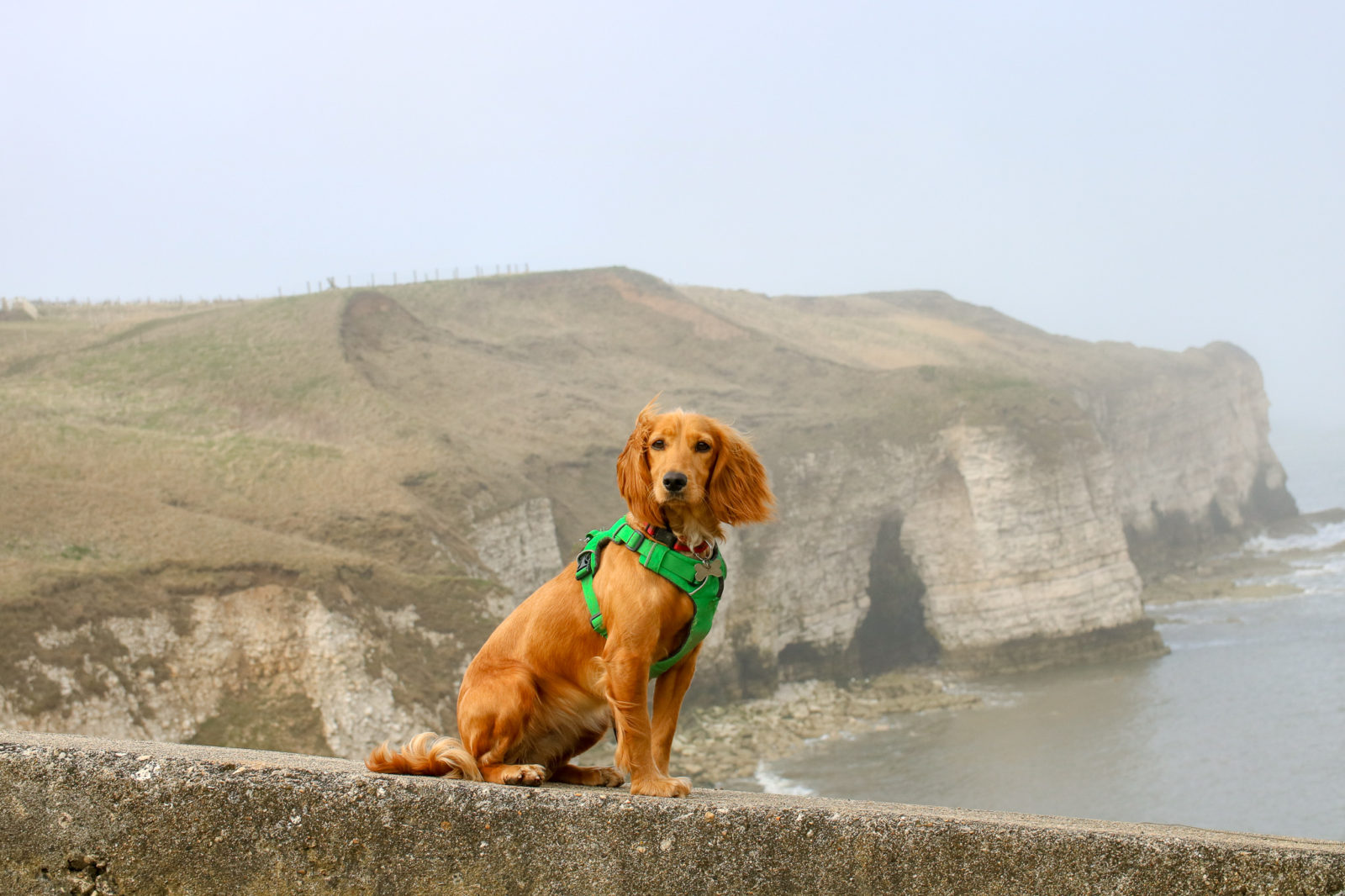 East Yorkshire Walks With Dogs