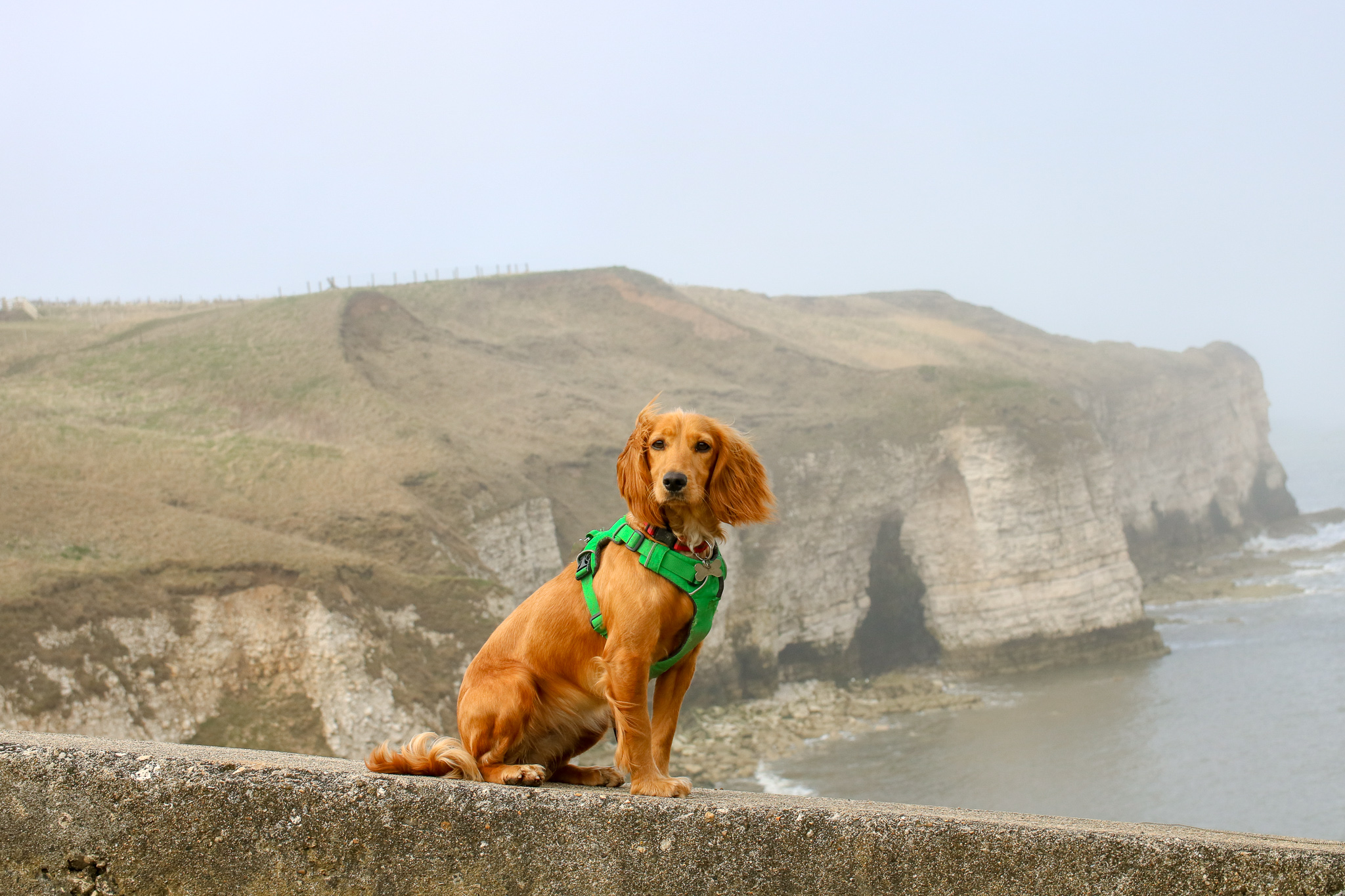 Dog Friendly East Yorkshire: Flamborough Head and Danes Dyke