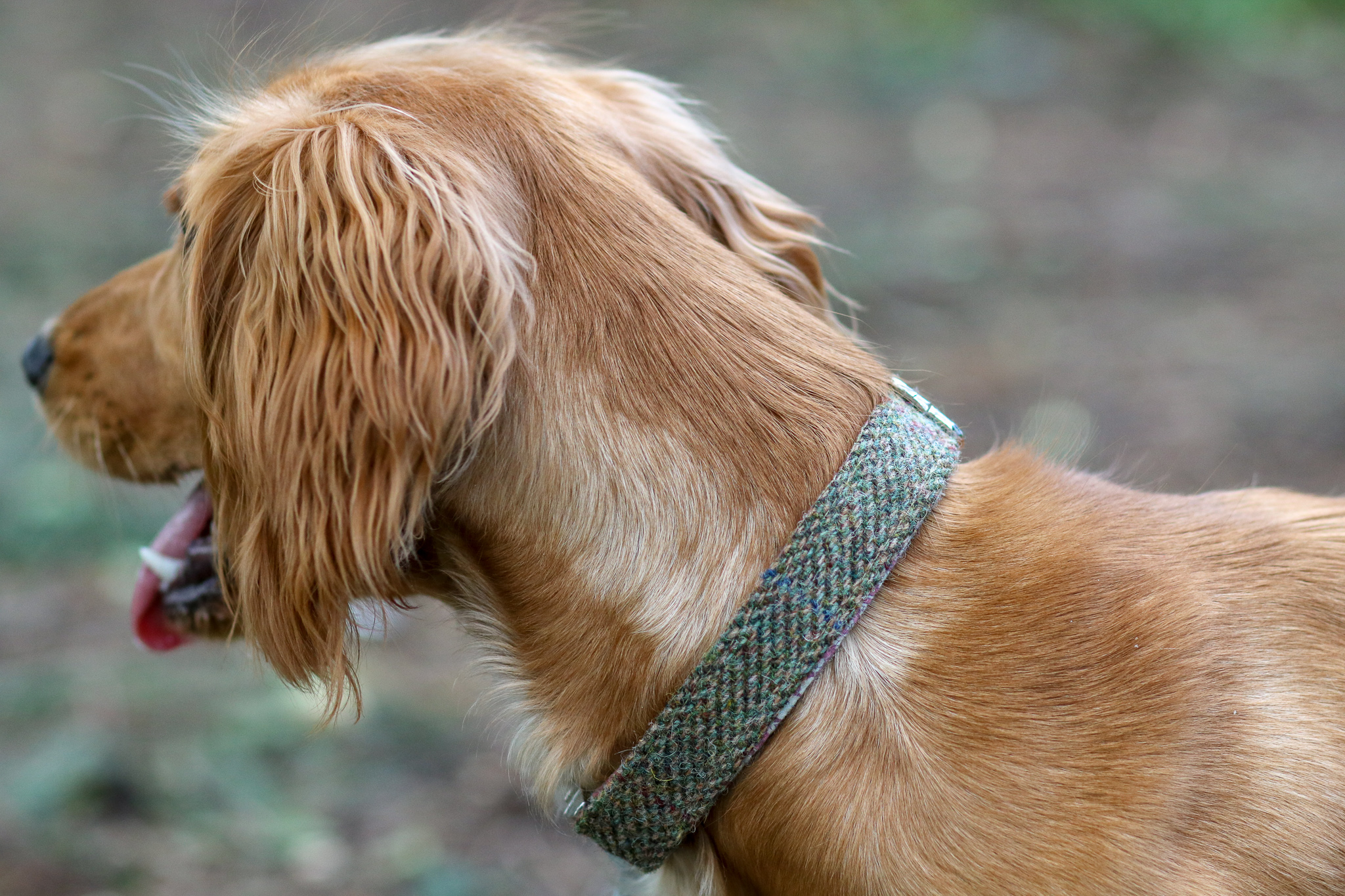 Bark Off Shop Harris Tweed Dog Collar Review
