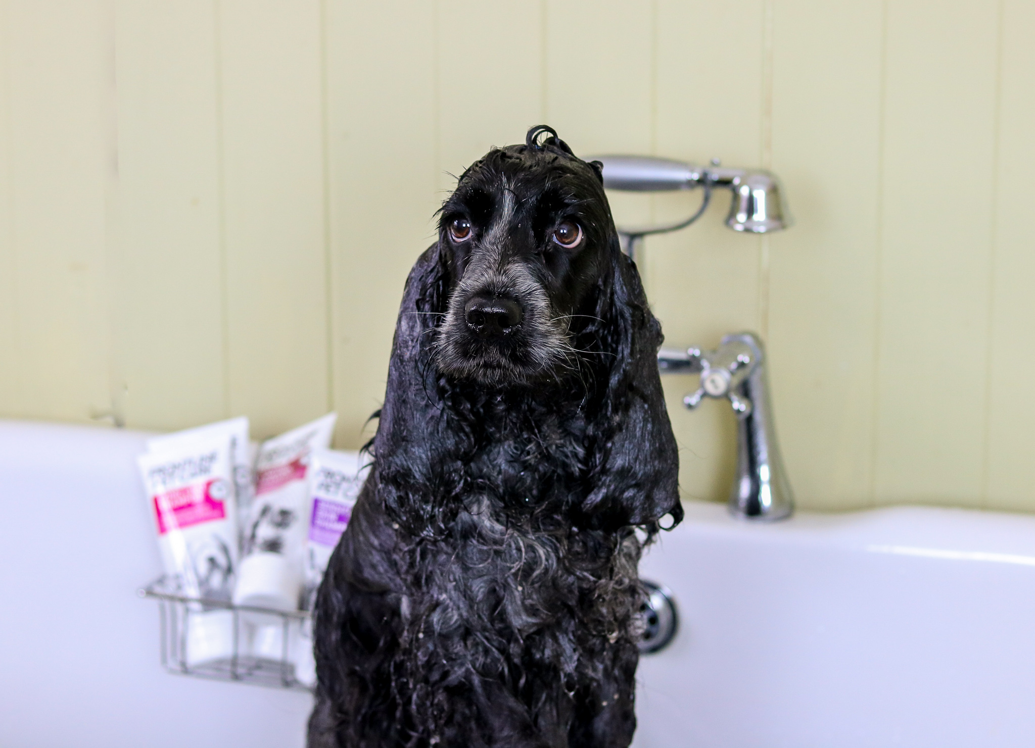 Frontline Pet Care Grooming Products Review