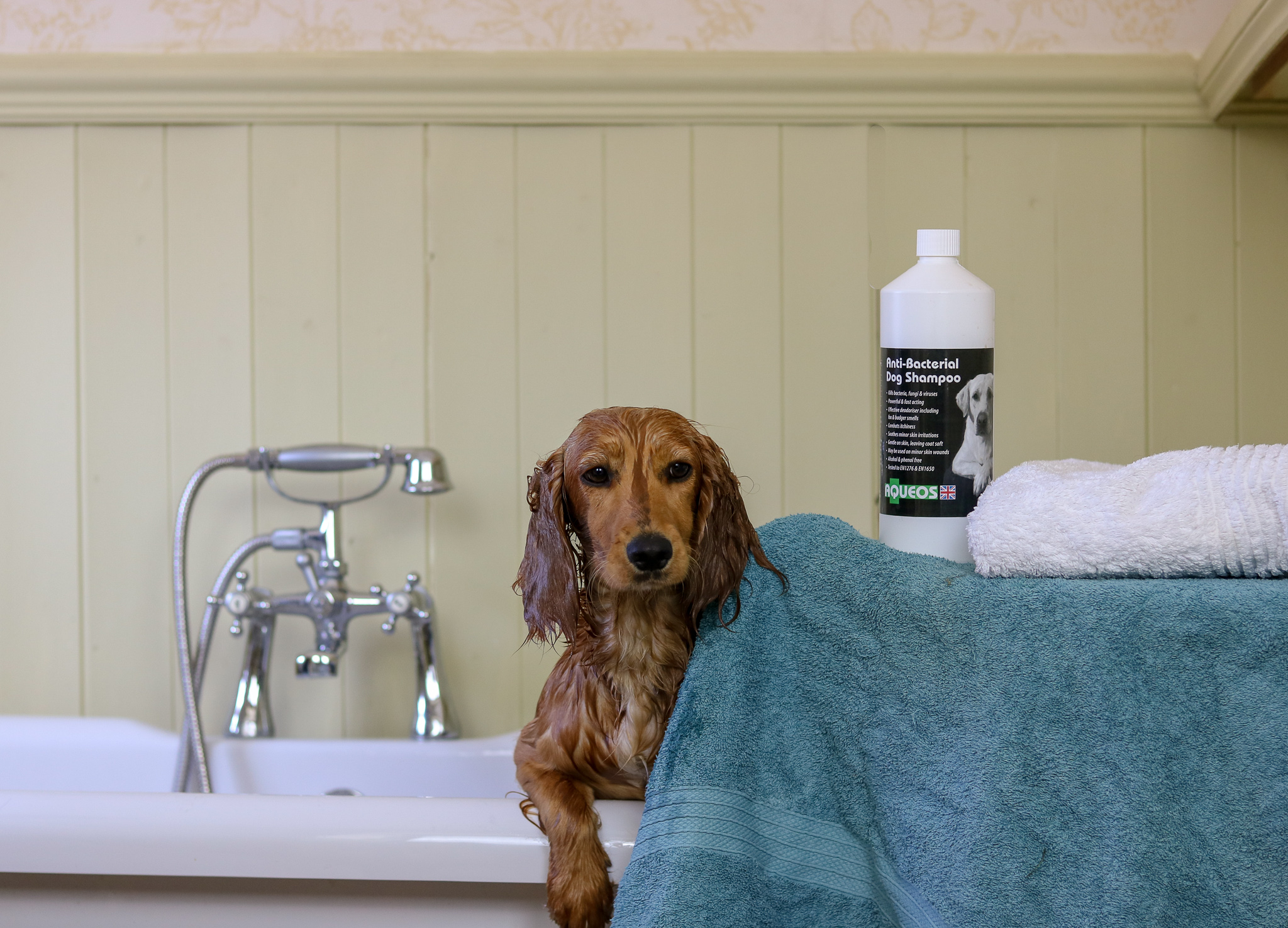Aqueos Canine Disinfectant Products Review