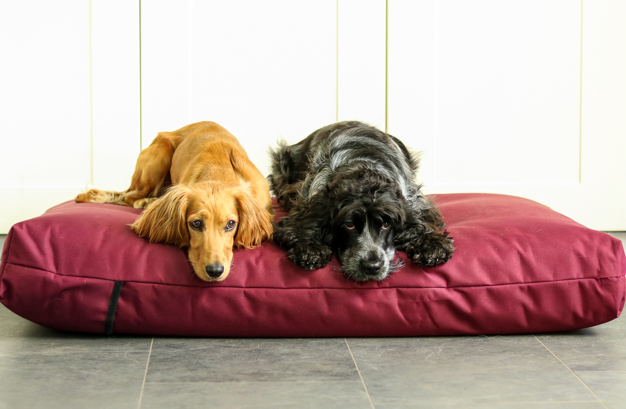 Let Sleeping Dogs Lie – Berkeley Waterproof Orthopaedic Dog Bed Review