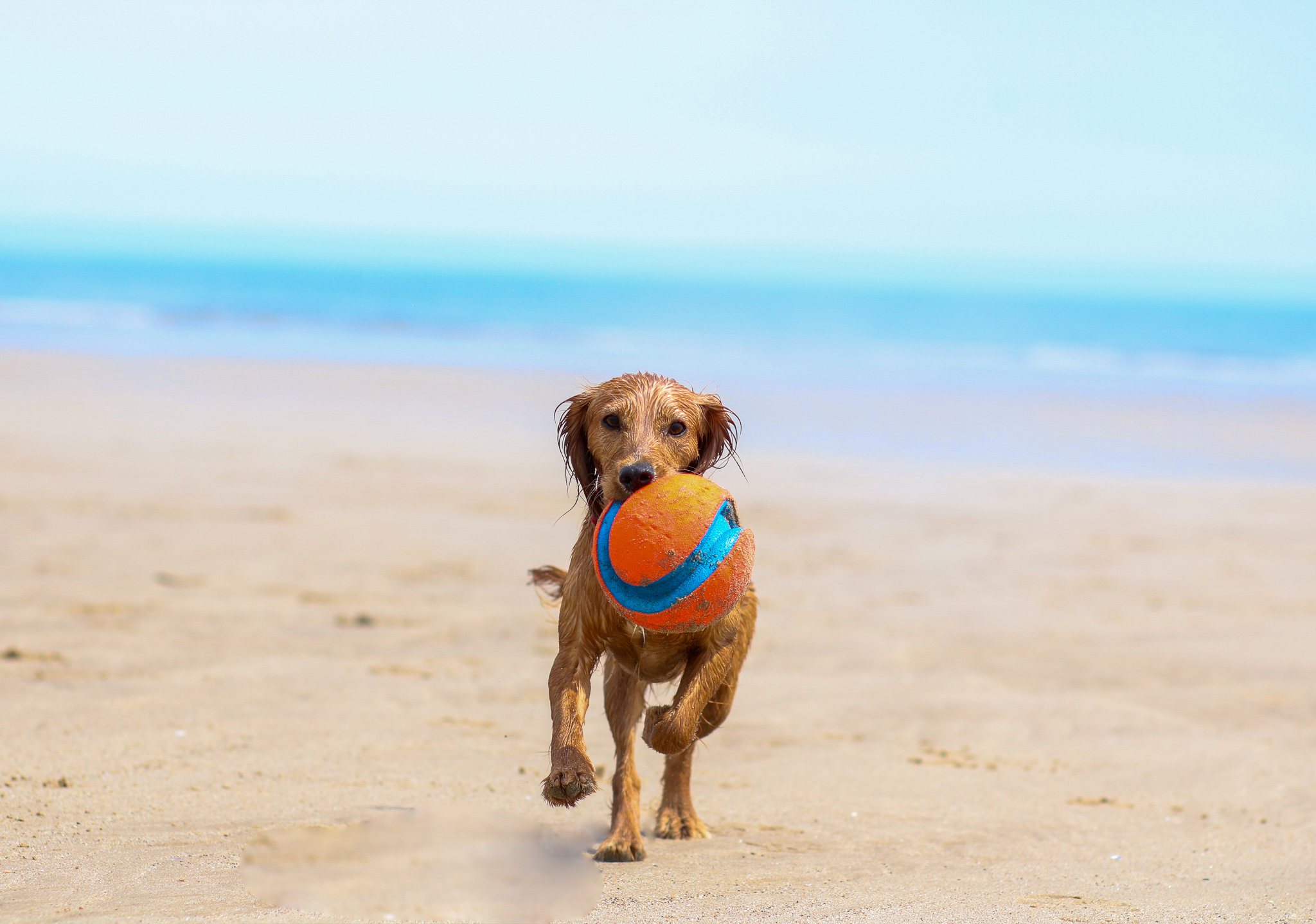 Take Your Dog on Holiday  – Why dogs benefit from a break