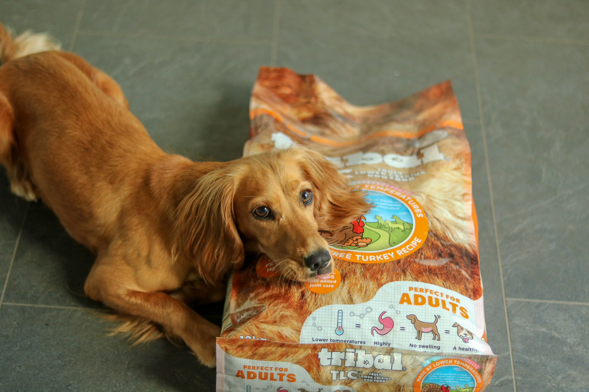 Cool Dogs Eat Cold Pressed – Tribal TLC  Dog Food review