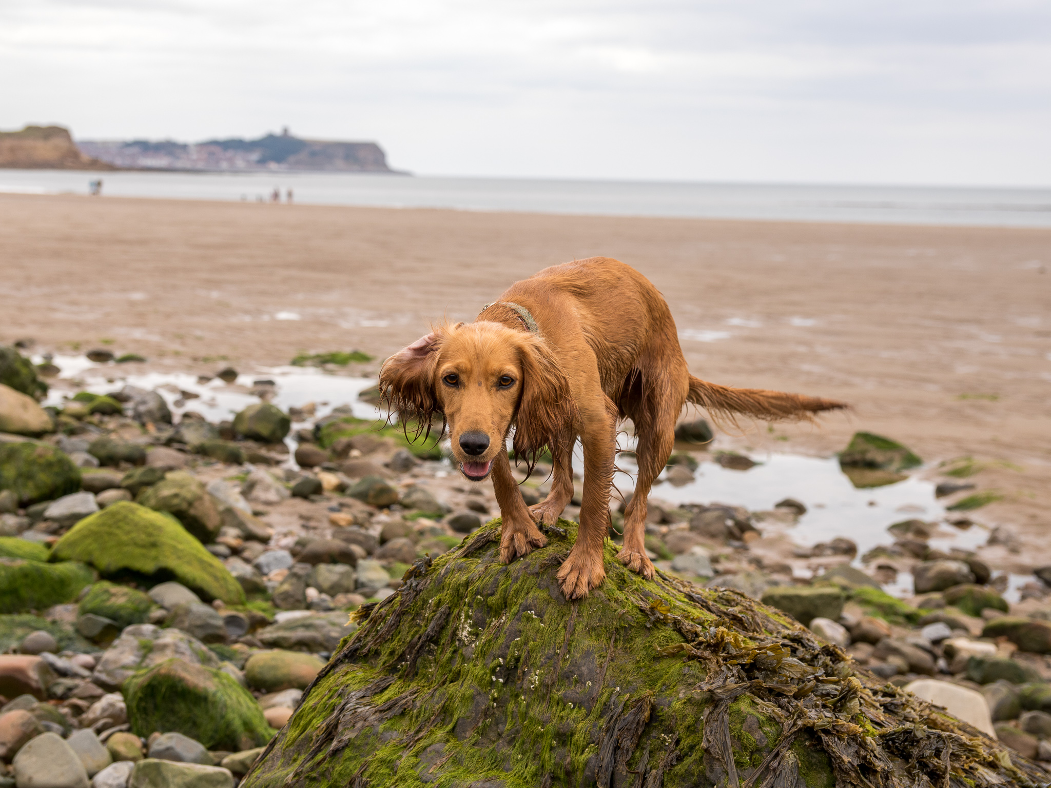 Dog Friendly Yorkshire – Filey