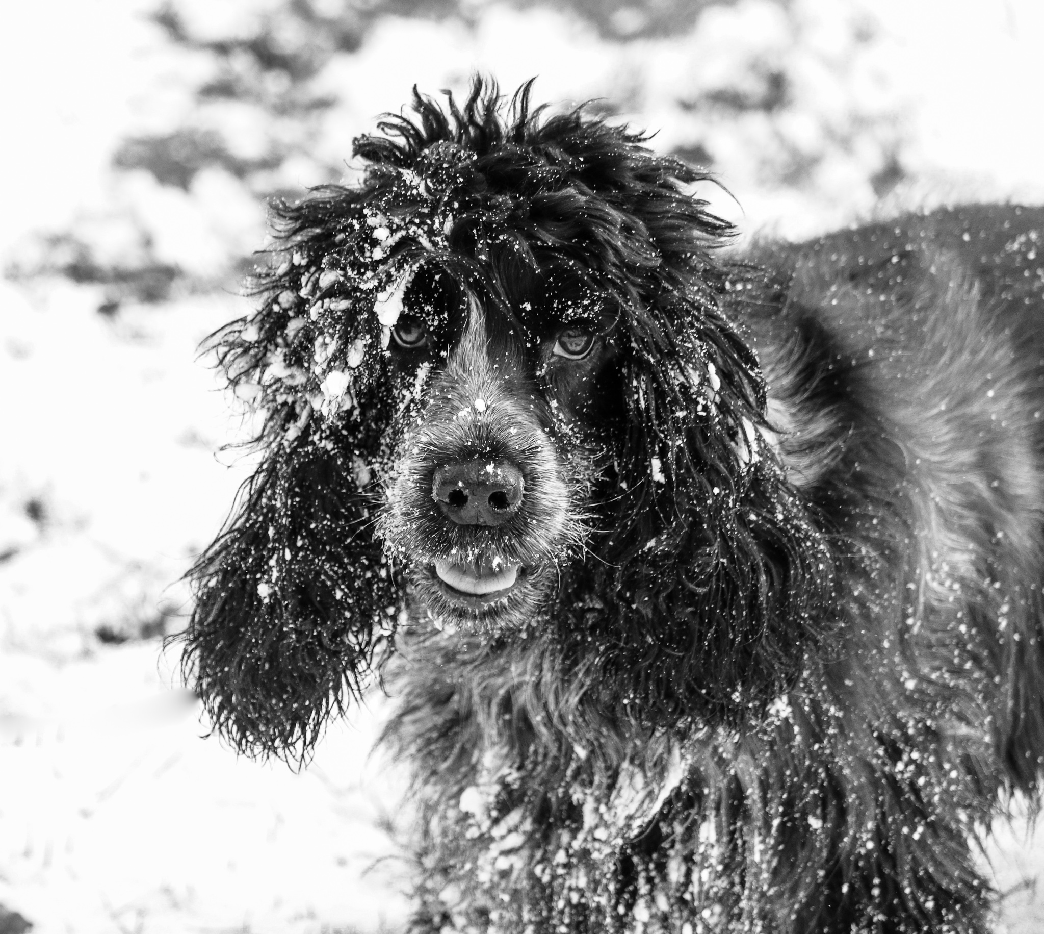 Get Your Dog Winter Ready