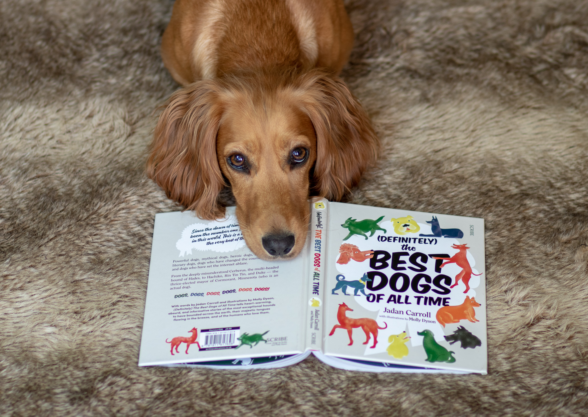 (Definitely) The Best Dogs of All Time by Jadan Carroll – Book Review