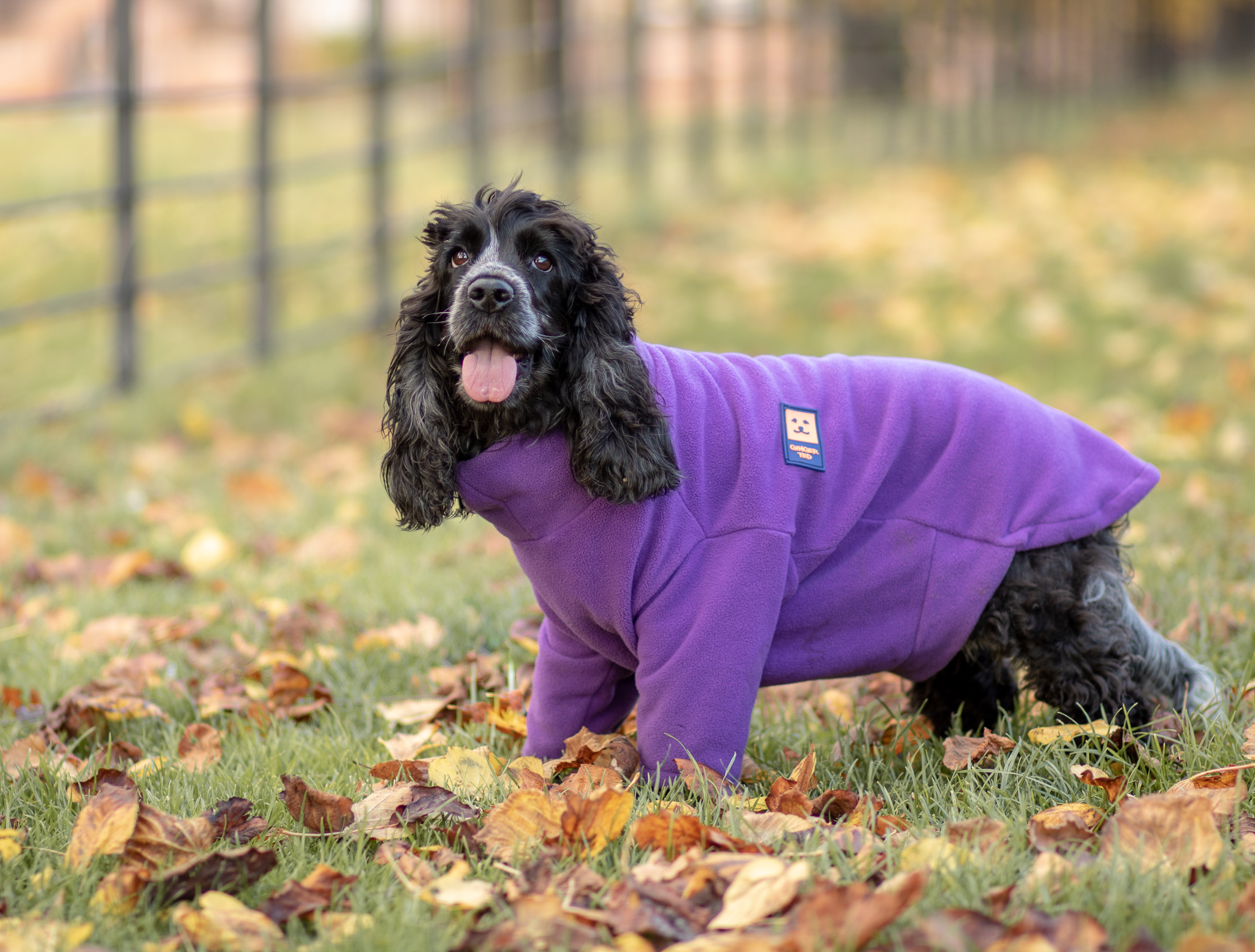 Ginger Ted Dog Coat and Dog Fleece Jumper Review