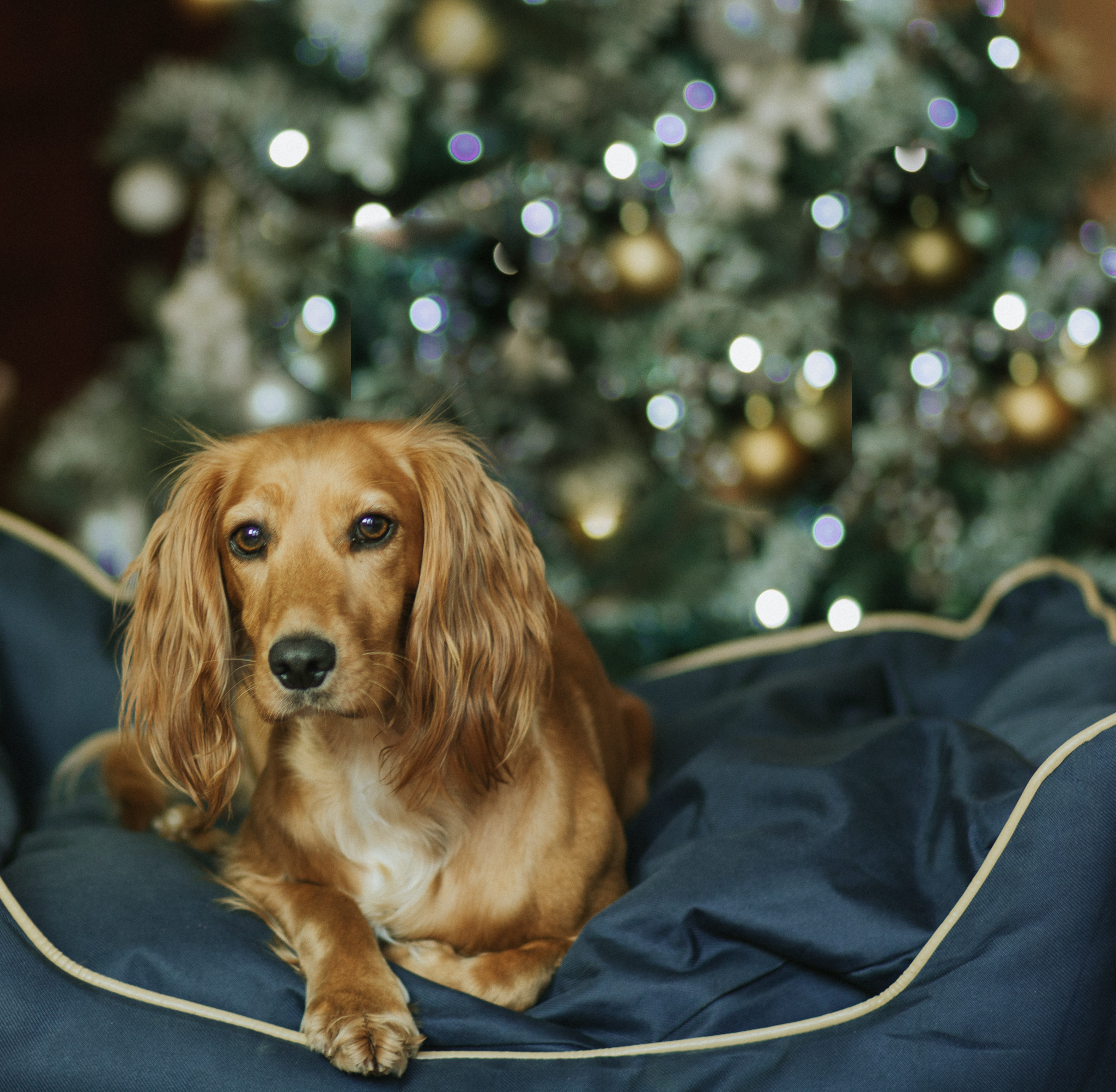 Give your dog the gift of relaxation this Christmas