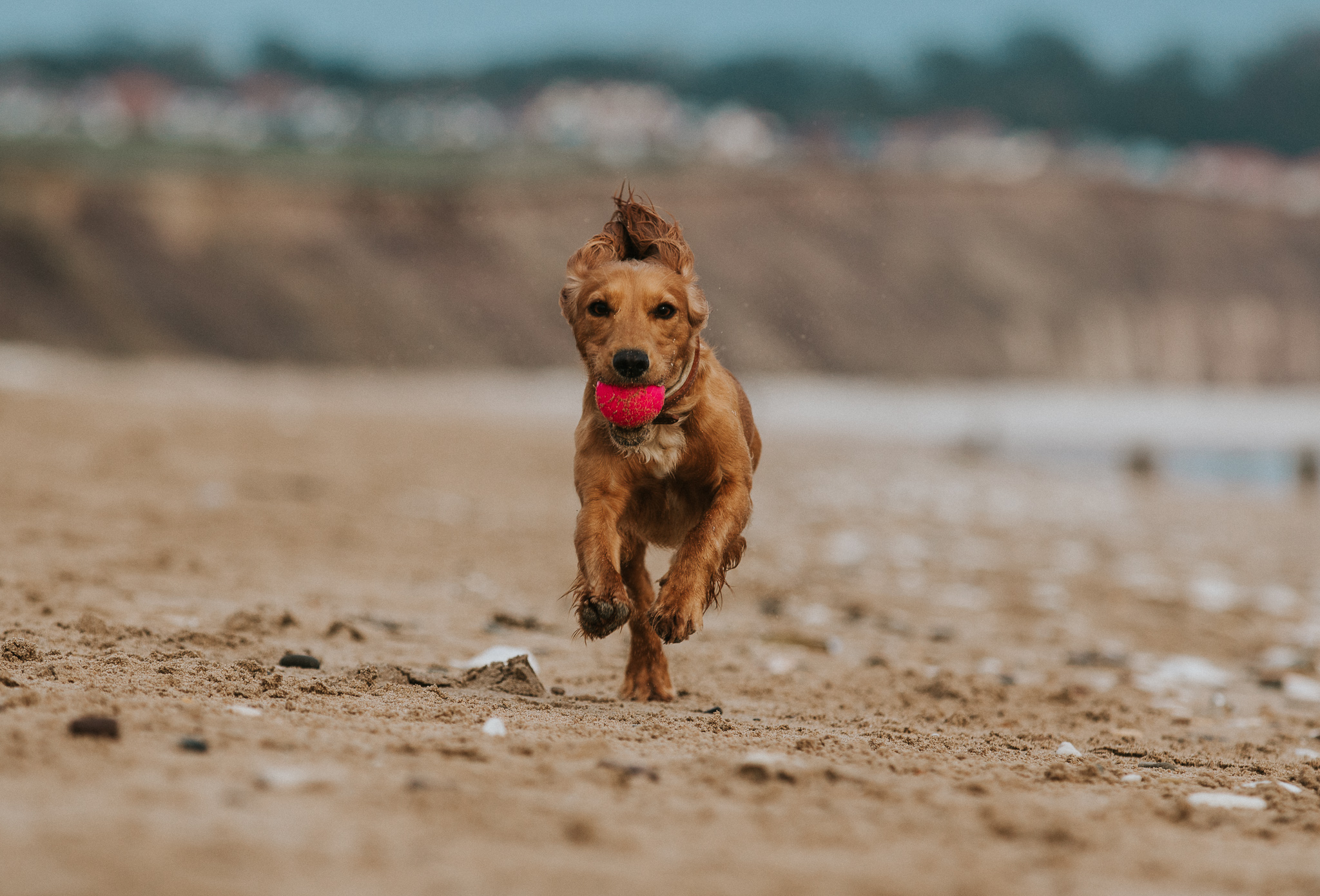 Our Top 10 Dog Friendly Beaches in Yorkshire