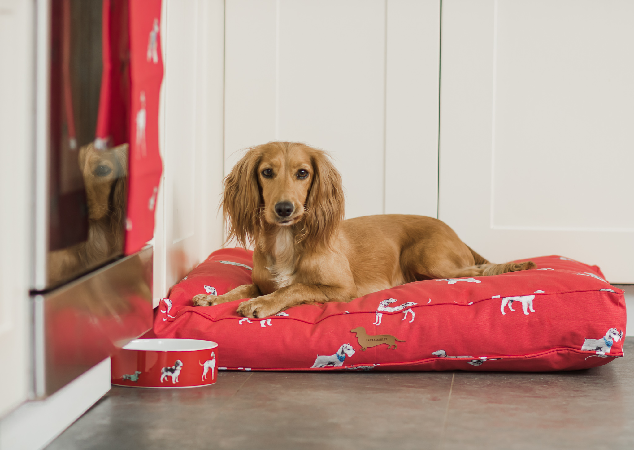 "Make your home more dog friendly with the ""Dogs on Parade"" range from Laura Ashley"