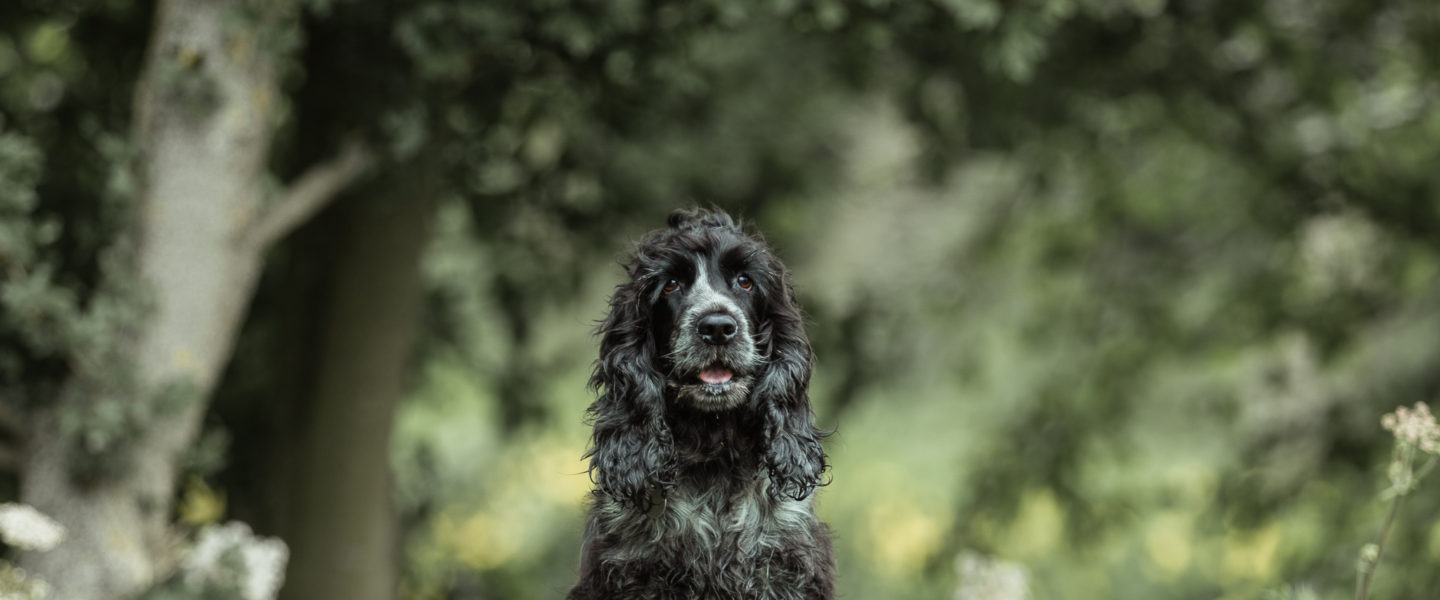 7 Great Dog Walks in East Yorkshire